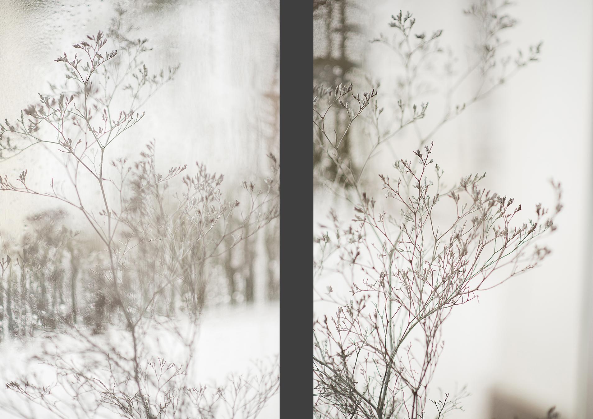 MILUNA-Ewa-Milun-Walczak-Piekne-Kwiaty-Zimowy-Zima-makro-suchotka-bialy-1