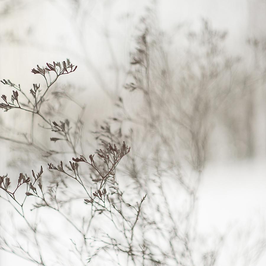 MILUNA-Ewa-Milun-Walczak-Piekne-Kwiaty-Zimowy-Zima-makro-suchotka-bialy-3