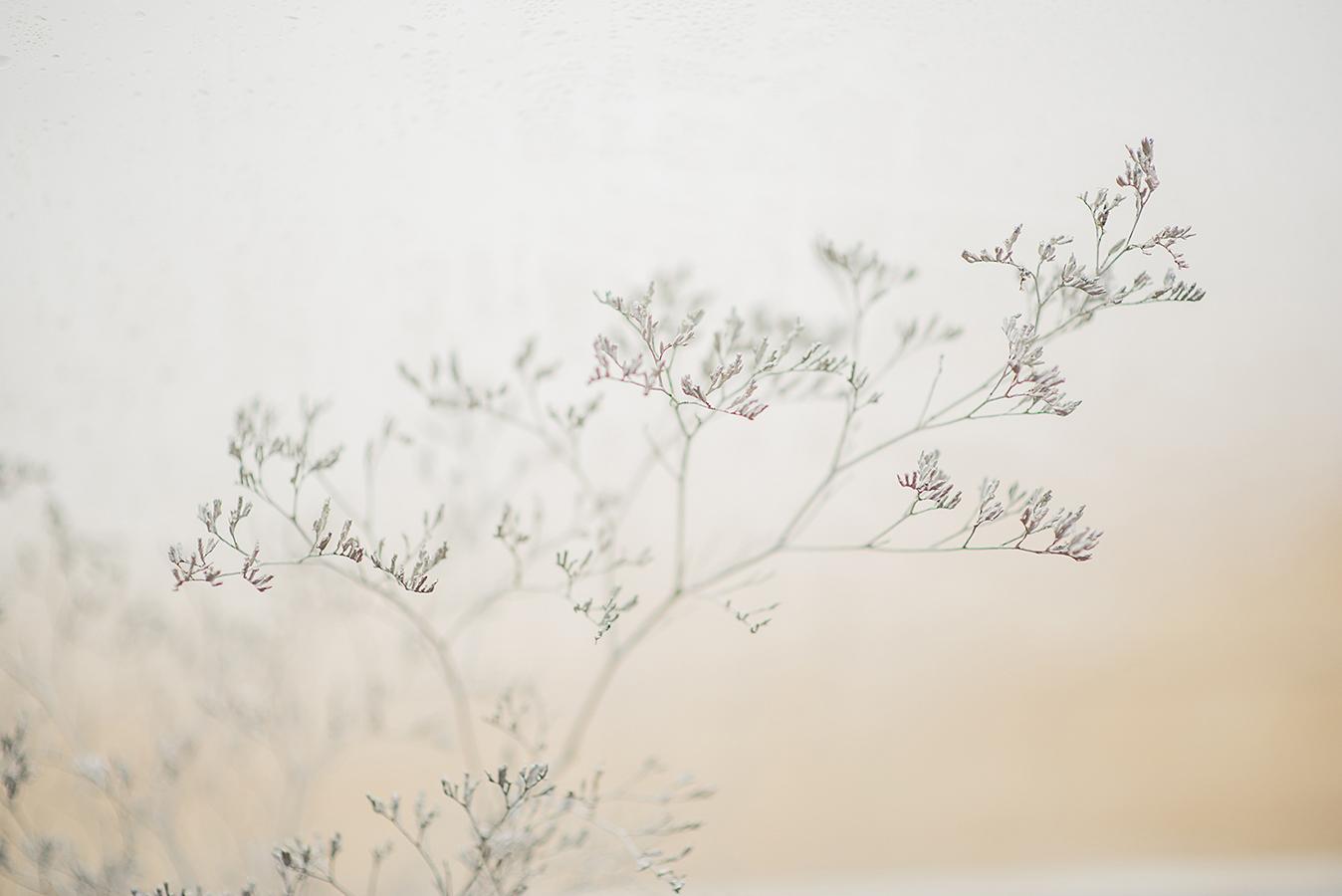 MILUNA-Ewa-Milun-Walczak-Piekne-Kwiaty-Zimowy-Zima-makro-suchotka-bialy-4