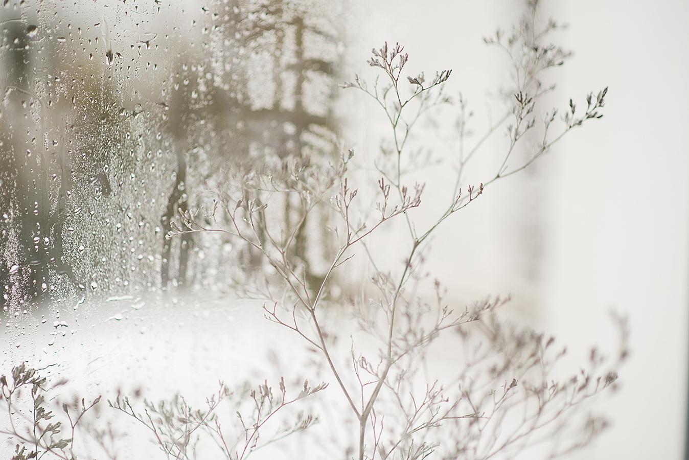 MILUNA-Ewa-Milun-Walczak-Piekne-Kwiaty-Zimowy-Zima-makro-suchotka-bialy-6