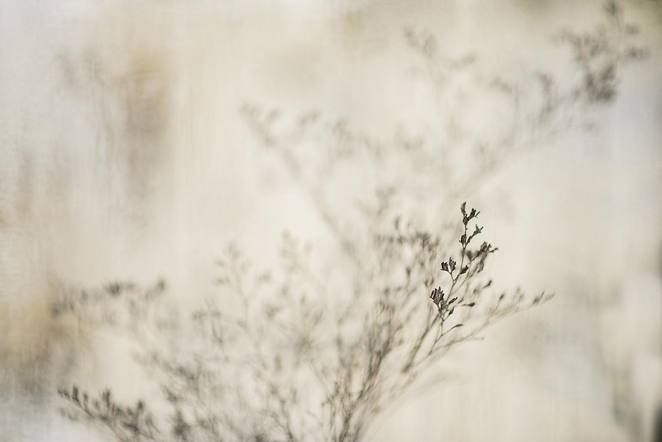 MILUNA-Ewa-Milun-Walczak-Piekne-Kwiaty-Zimowy-Zima-makro-suchotka-bialy-8