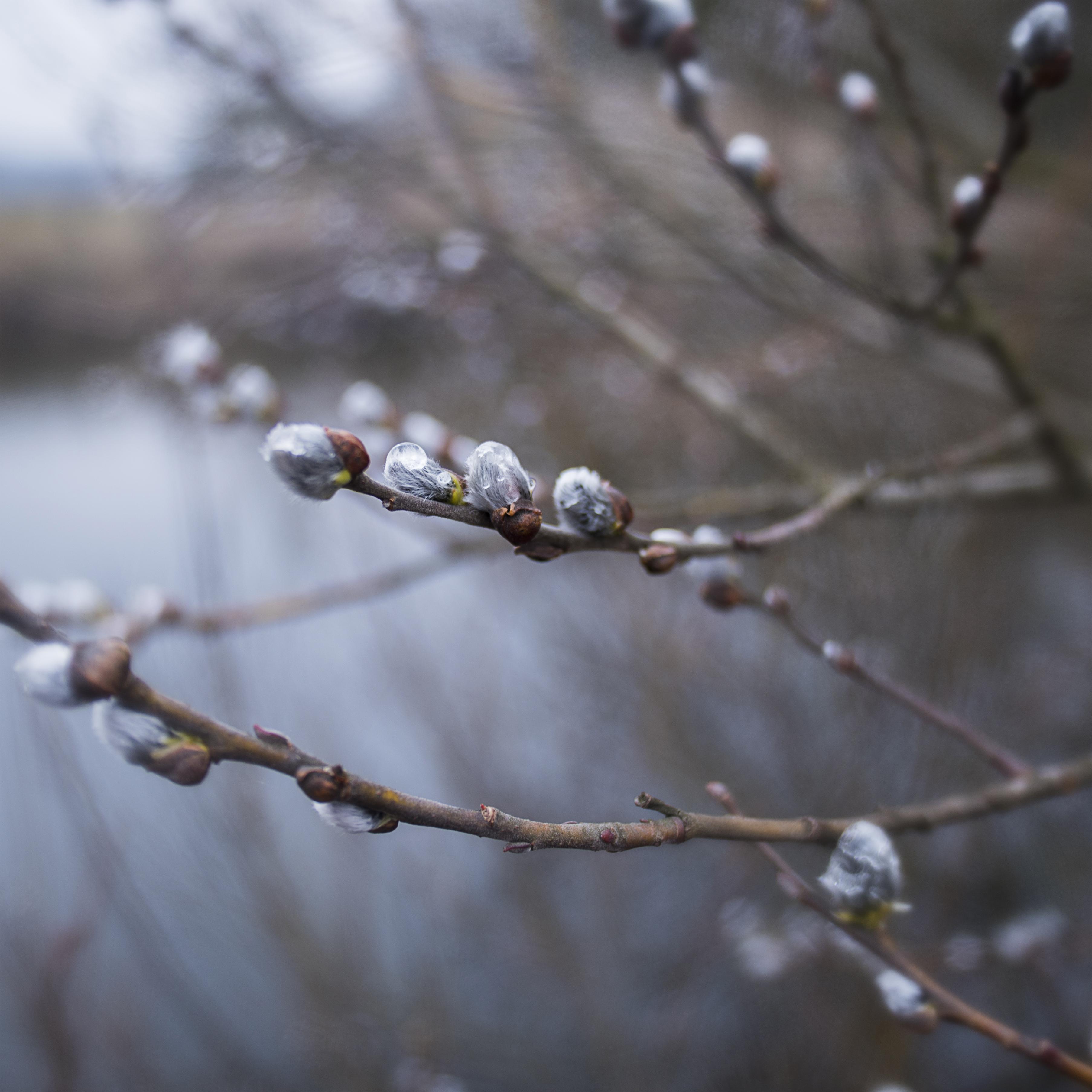 MILUNA-Ewa-Milun-Walczak-wiosna-ropucha-zaba-wczesna-kiełki-zazielenienia-wies-12