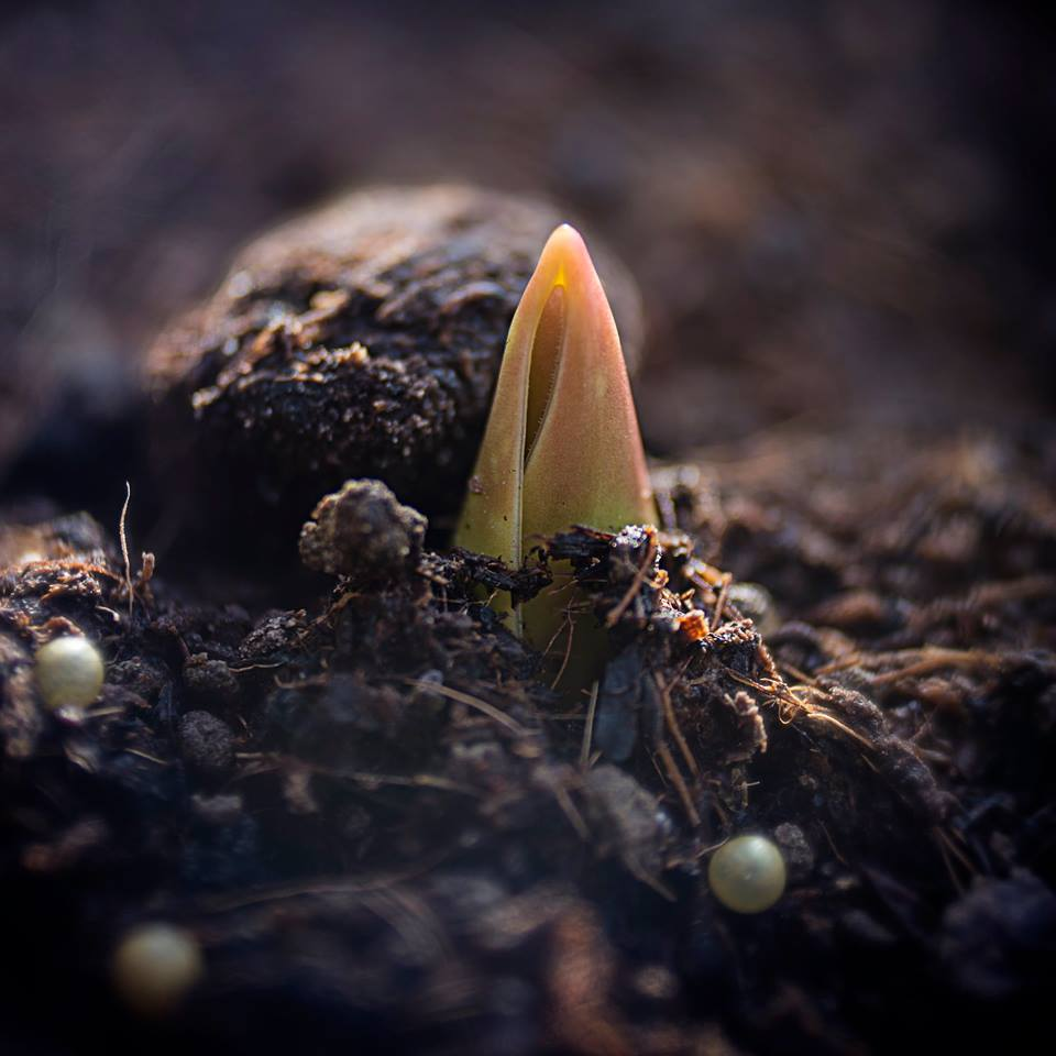 MILUNA-Ewa-Milun-Walczak-wiosna-tulipan-kiełek-nowolijek-roslina-pierwszy-lisc-natura-budzi-sie-1