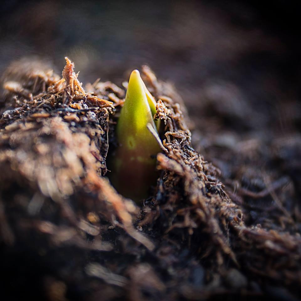 MILUNA-Ewa-Milun-Walczak-wiosna-tulipan-kiełek-nowolijek-roslina-pierwszy-lisc-natura-budzi-sie-5